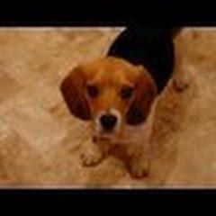 beaglebrigade
