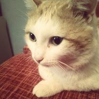 CatDany — Asmongold Highlights