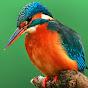 Birds Inc.