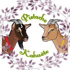 PISTACHE KAHUETE 2 p'tites chèvres naines
