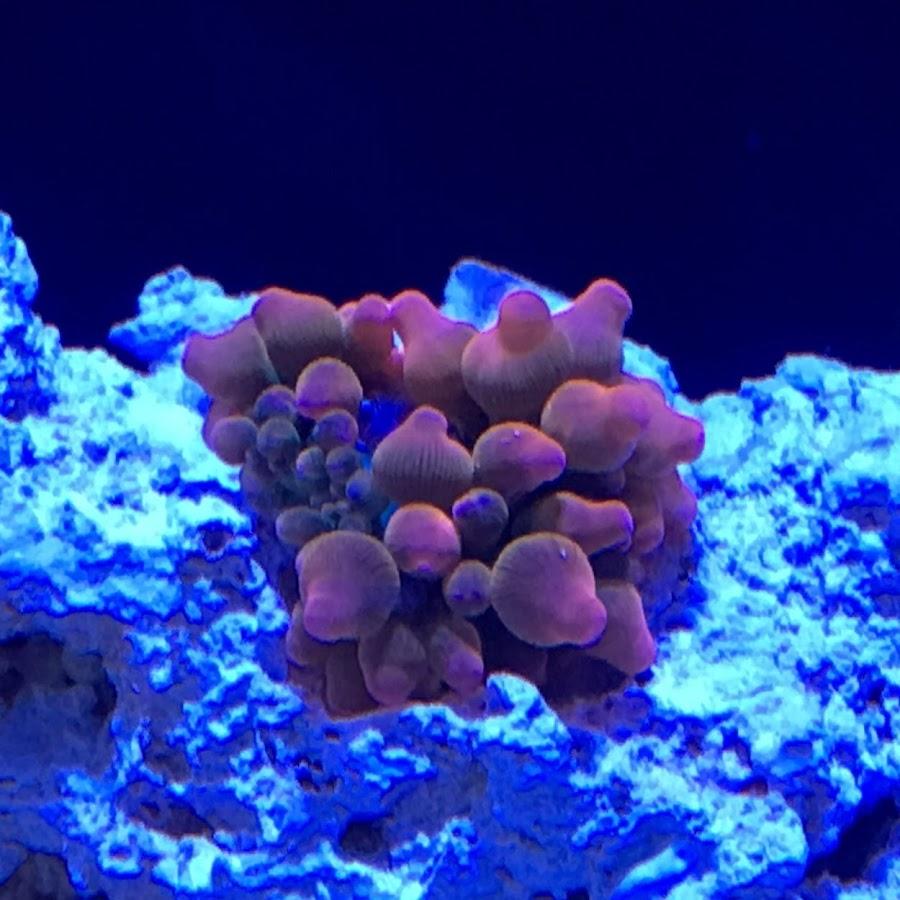 My Reef Life