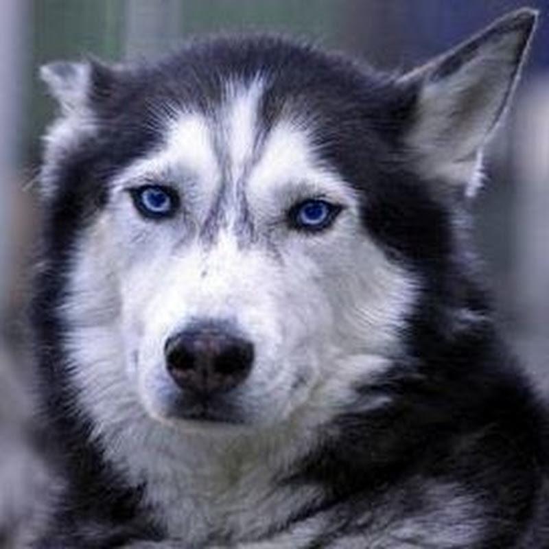 Hunde-fan.de
