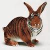 VDJ Rabbiter