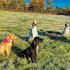 Dogtrainers UK.