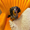 PetSaver Healthy Pet Superstore