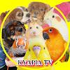 犬とインコKYAPIA TV
