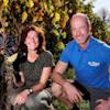 wijngaard de plack Grutters