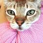 Katze Ratgeber