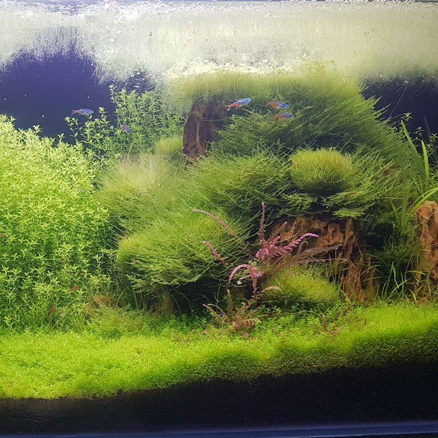 ADA Aquascaping Design Arts