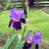Gumby Central Official