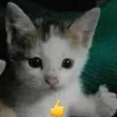 BeautyBeauty