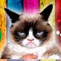 Funnycat12