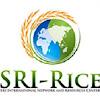 SRI Rice