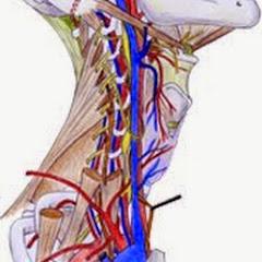 Nice Anatomie