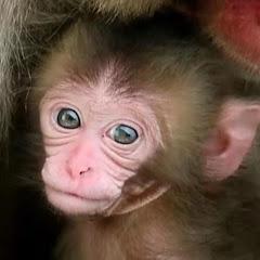 Baby Monkey J