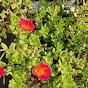 Punjabi Rockstar