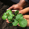Black Permaculture Network