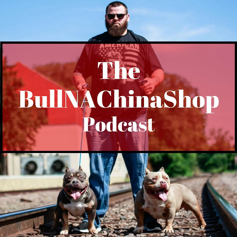Bull-NA-ChinaShop TV