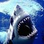 SharkyStudios1501