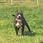 Midnighttrainbullies kennel/homestead (midnighttrainbullies-vlogs-smith)