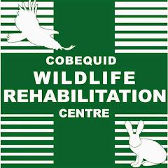CobequidWildlife