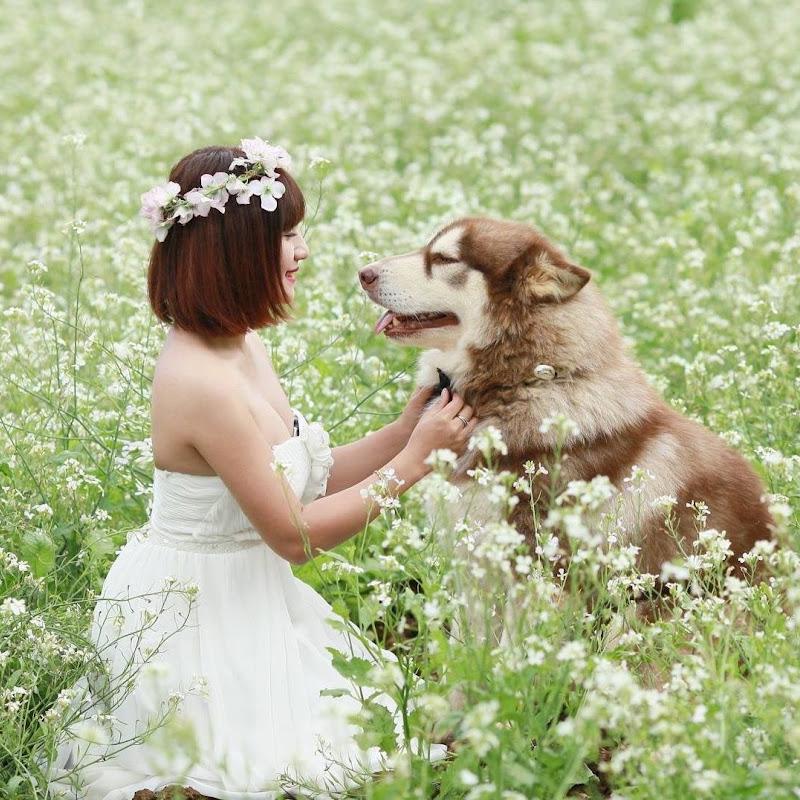 Mật Pet Family
