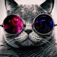 Kedi Canını Senin
