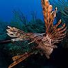 fishspearit