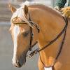 Chalani Australian Stock Horses