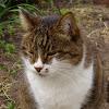 Коты и дача