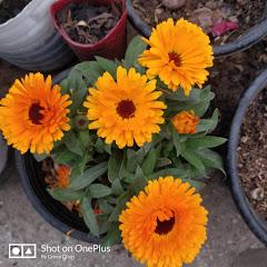 Home care for garden