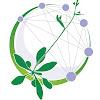 Arabidopsis Information Portal