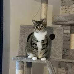 Yazan Al