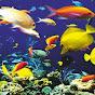 Anupam Aquarium Lovers
