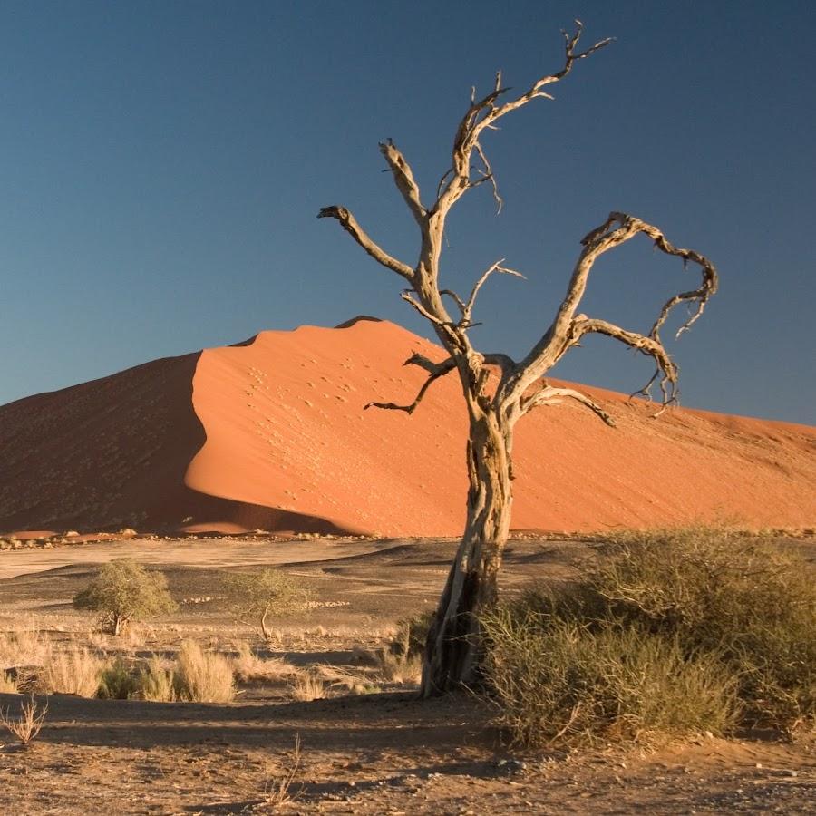 From The Desert
