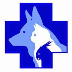 Современная ветеринария
