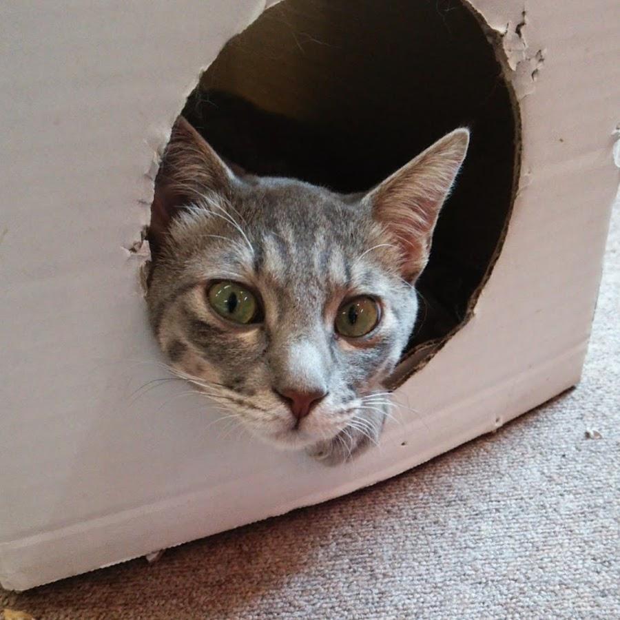 【猫カフェ キャッチー】予約・アクセス・割引クーポン - じゃらんnet