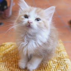 Cat +1 Channel ( PRIN )
