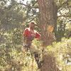 Todd's Marietta Tree Services
