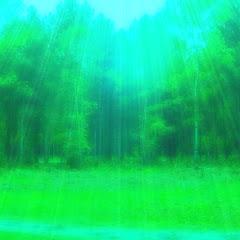 MeditationForest