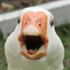 Dolan Darkest
