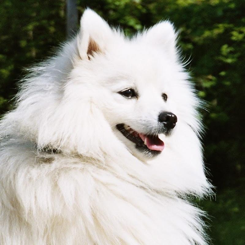 Chó Cưng (Dog Lover)