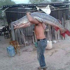 Pirarucu Fish Farming - AquaBioPonics