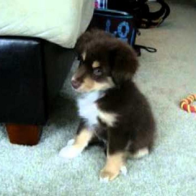 PuppyNewspawper