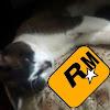 RMtinho