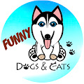Channel of Funny Dogs And Cats