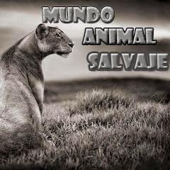 Mundo Animal Salvaje