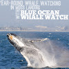 BlueOceanWhaleWatch