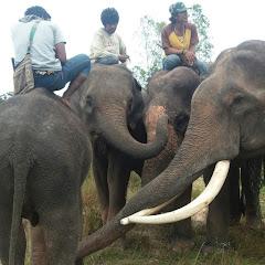 ีข่อยมักช้าง I love elephant