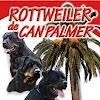 Rottweiler de Can Palmer